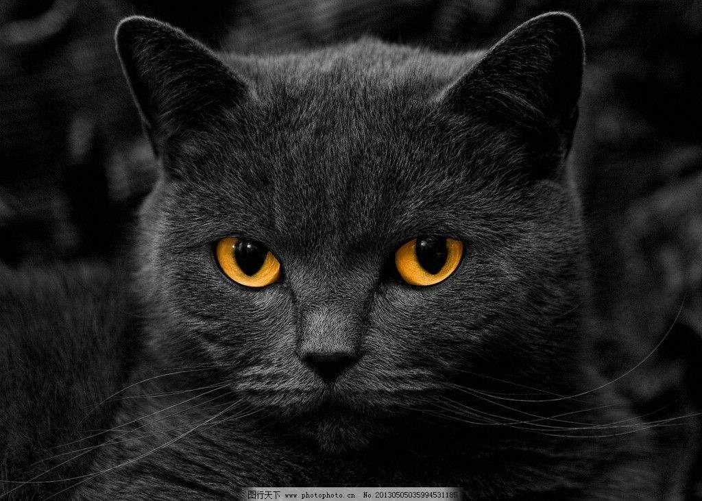 猫摄影.jpg